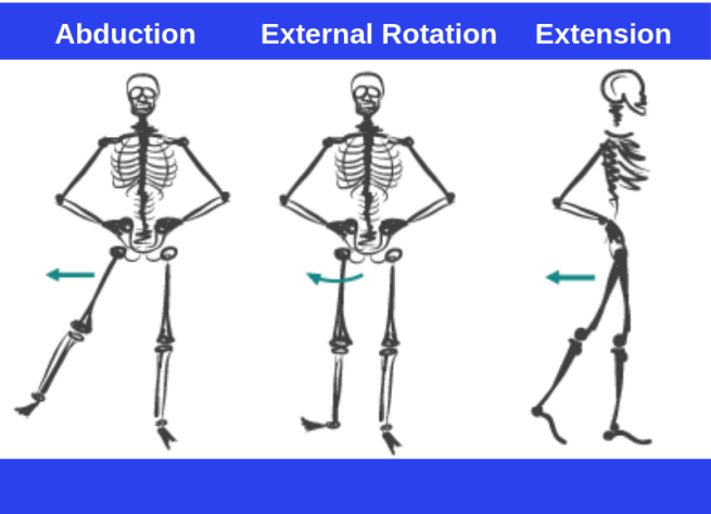 Main Functions of the Glutes